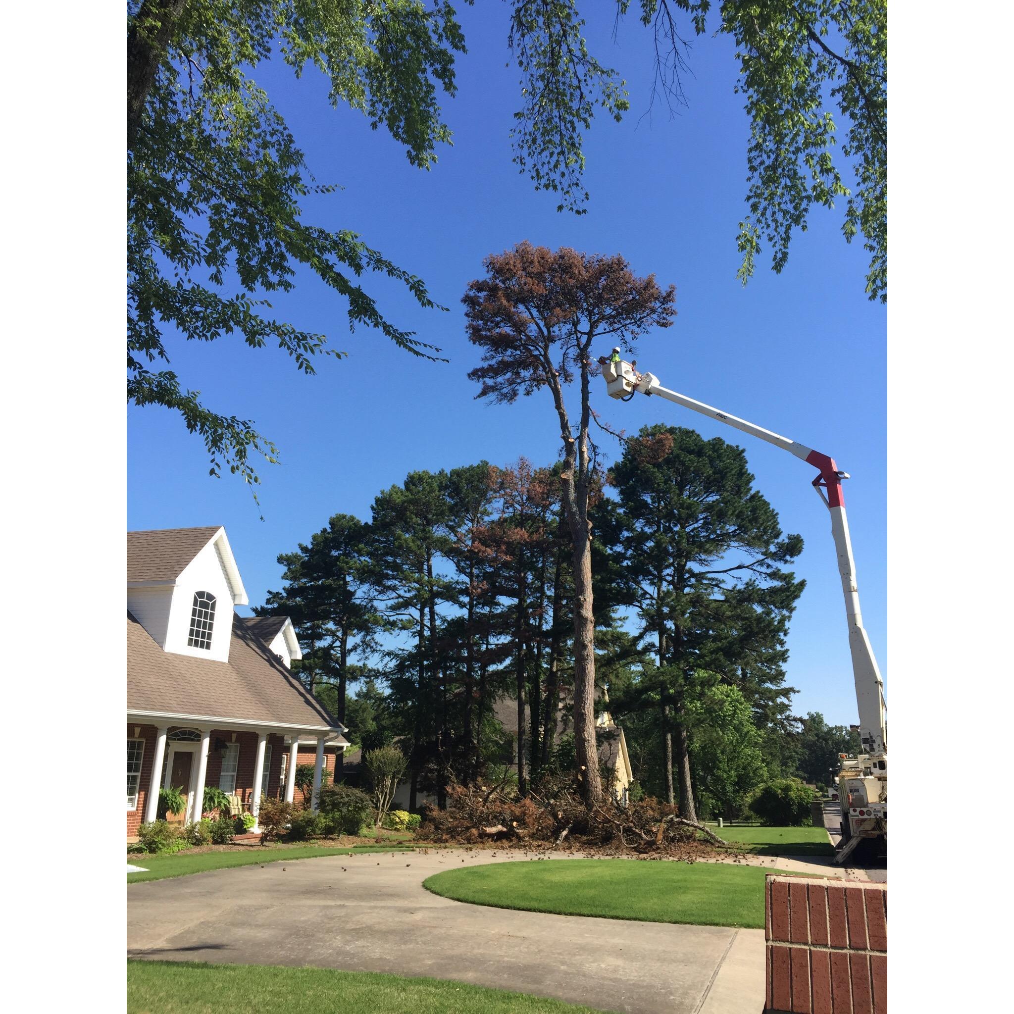 Dunlap Tree & Land Services