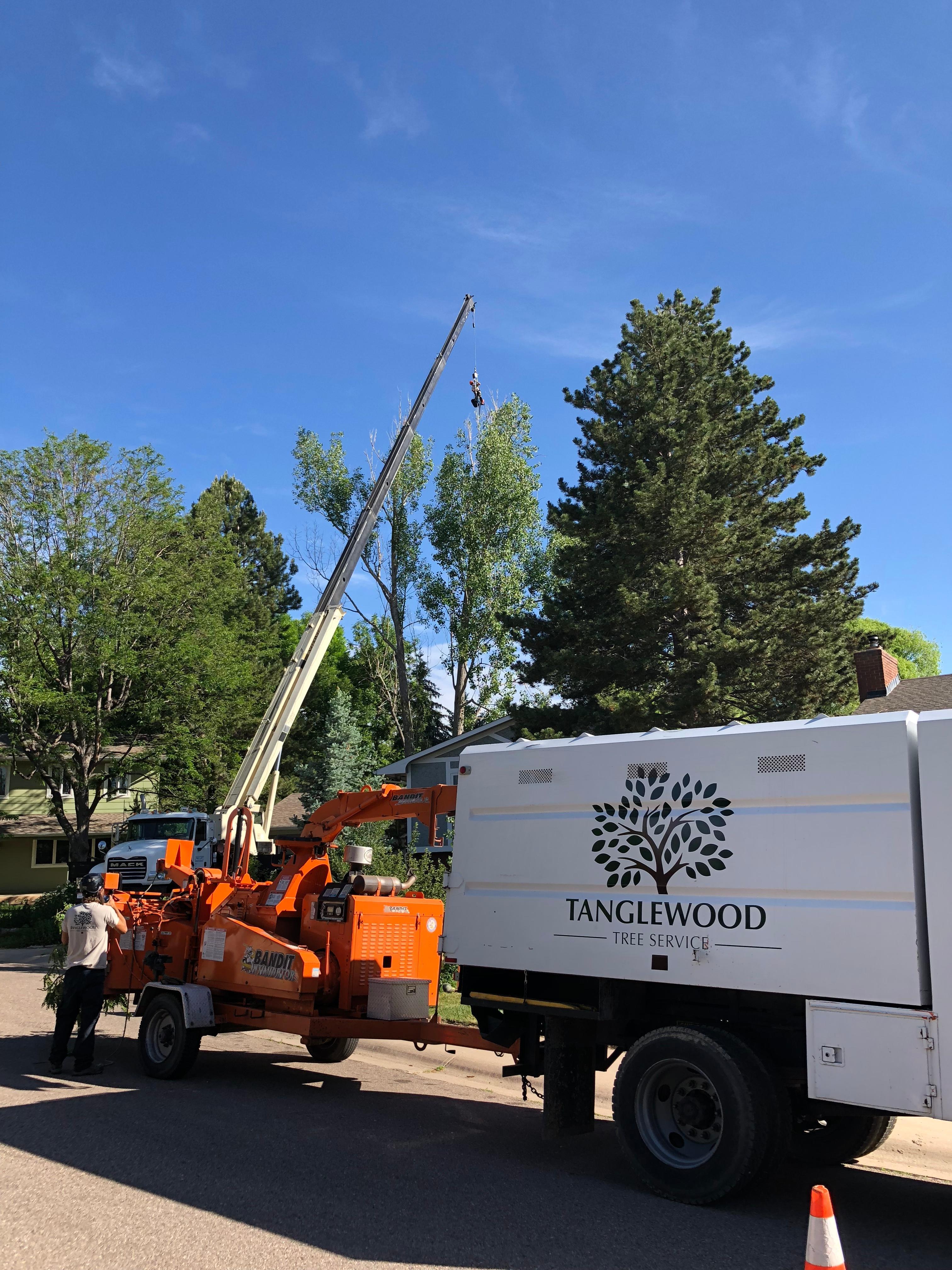 Tanglewood Tree Service image 1