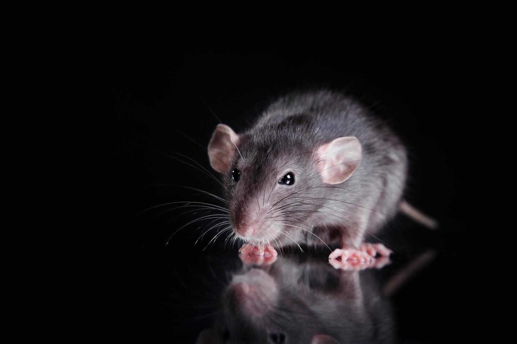 Verminator Pest Control LLC image 5