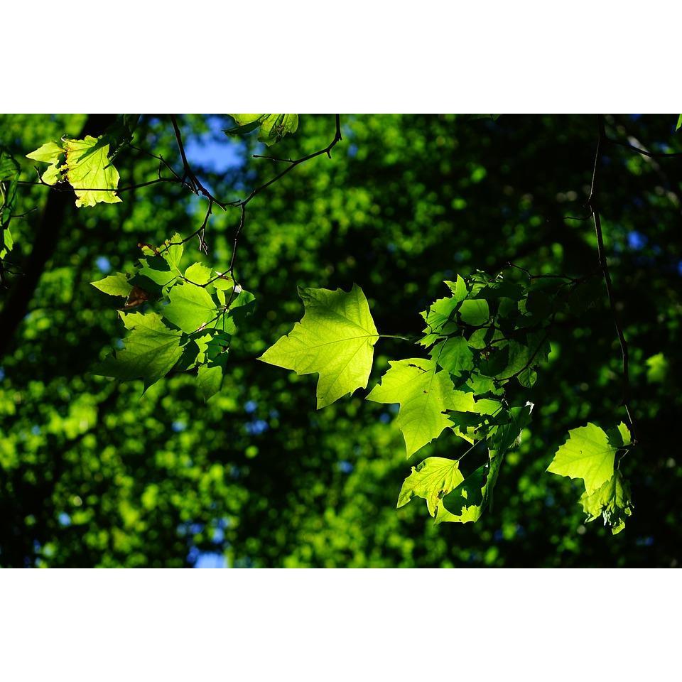Nassau Suffolk Tree Service