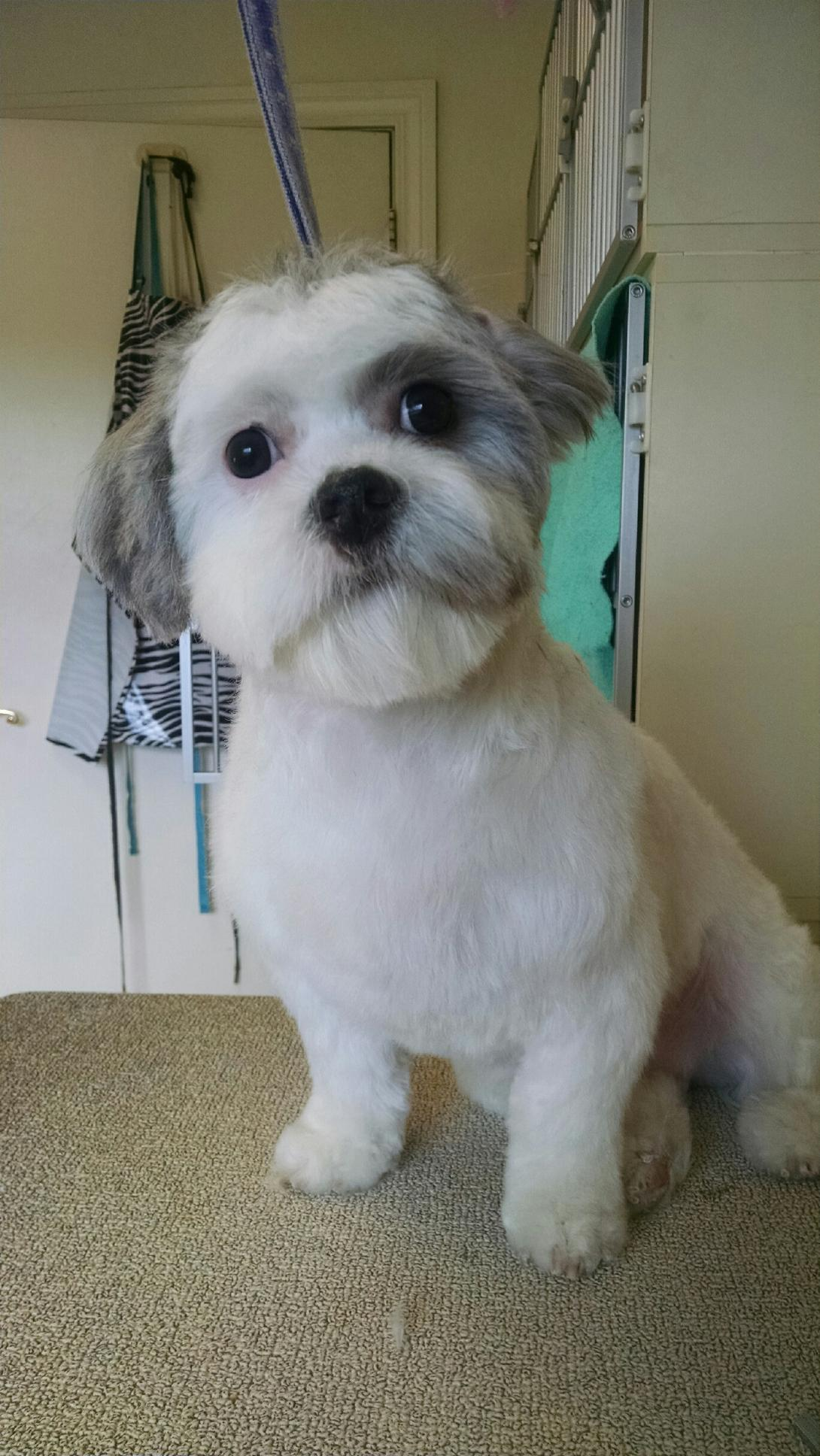Personal Touch Dog Grooming image 3