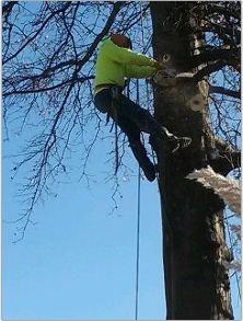 Kottman's Tree Services image 2