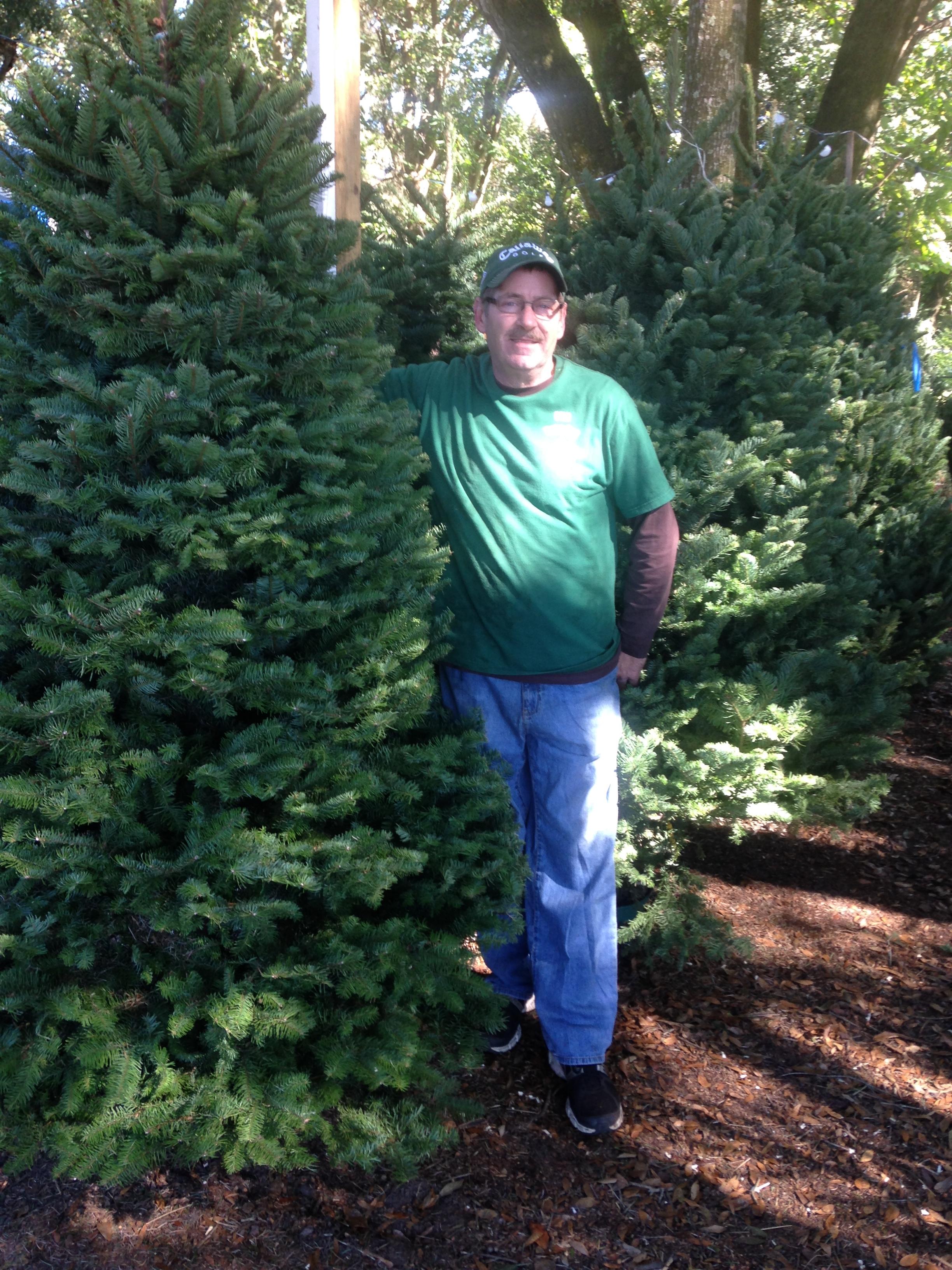 Dave's Christmas Tree Lot image 26