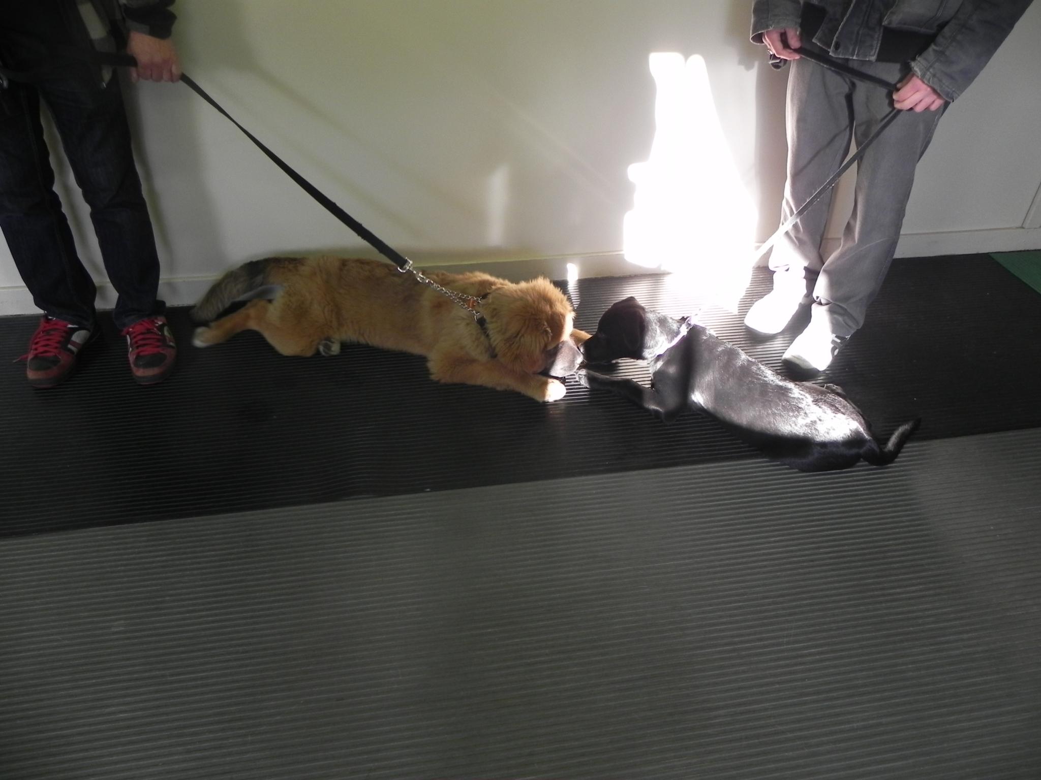 Ecole D'Obéissance Canine De Joliette à Saint-Paul