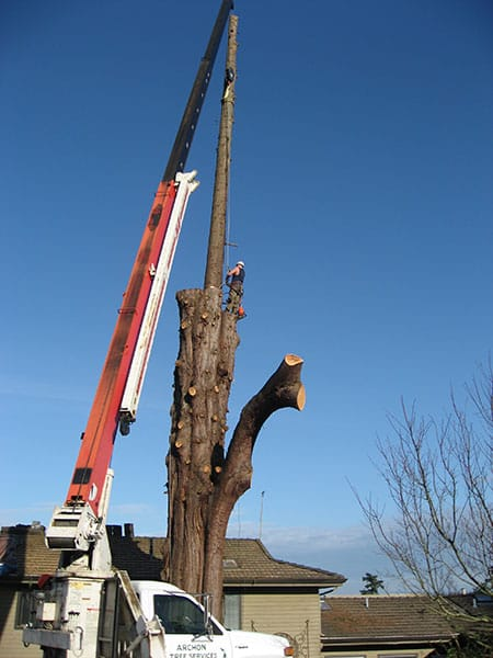 Archon Tree Services, Inc. image 10