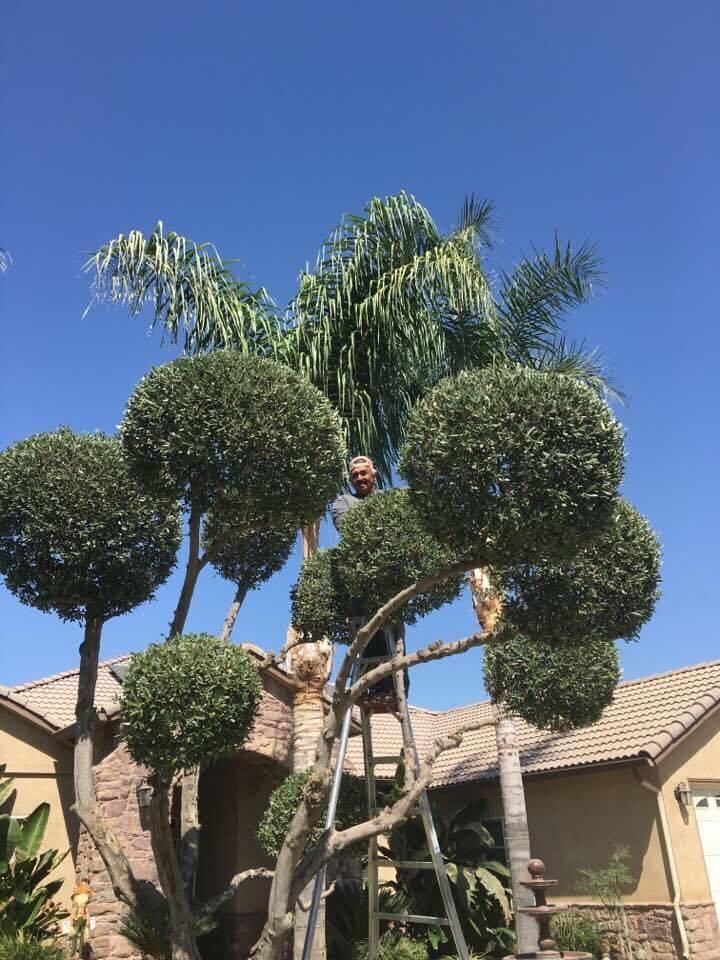 Gardening Service Victor Flores - Bakersfield, CA 93304 - (661)978-4853 | ShowMeLocal.com