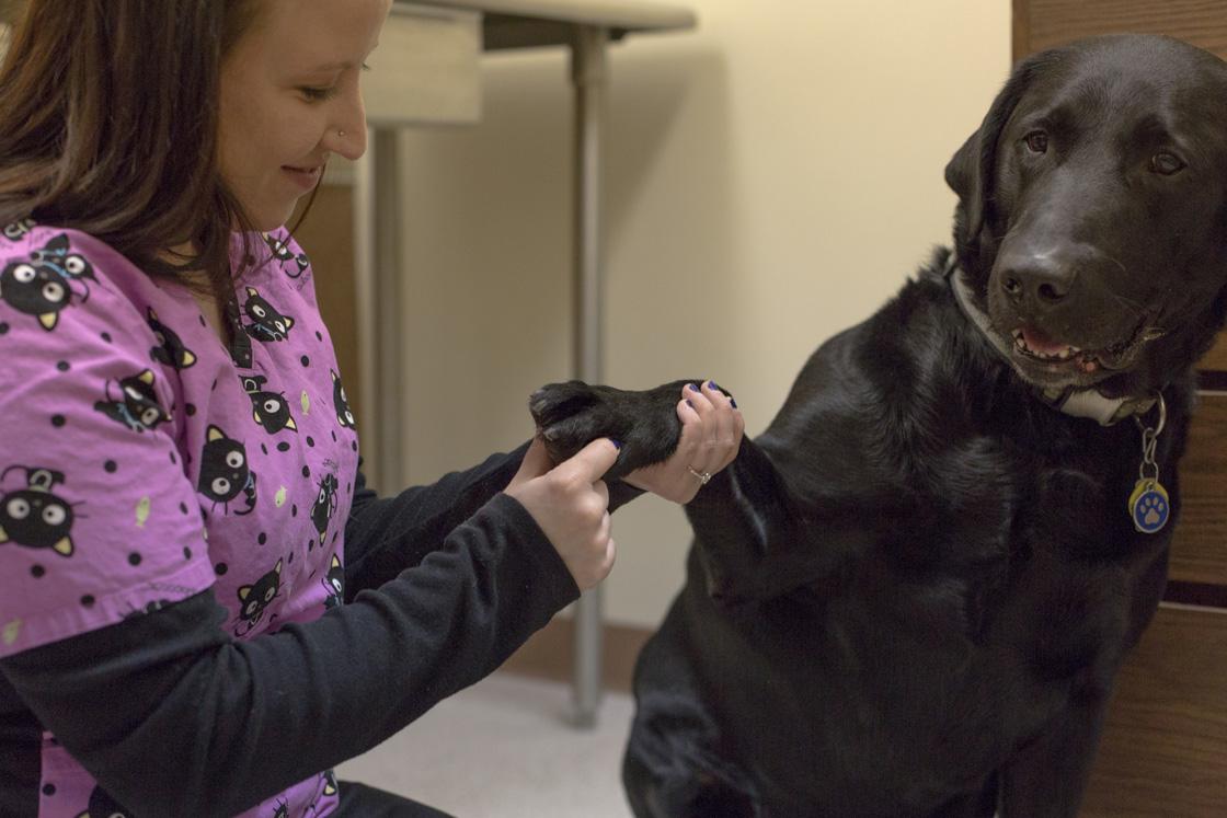 White Oak Veterinary Clinic image 2