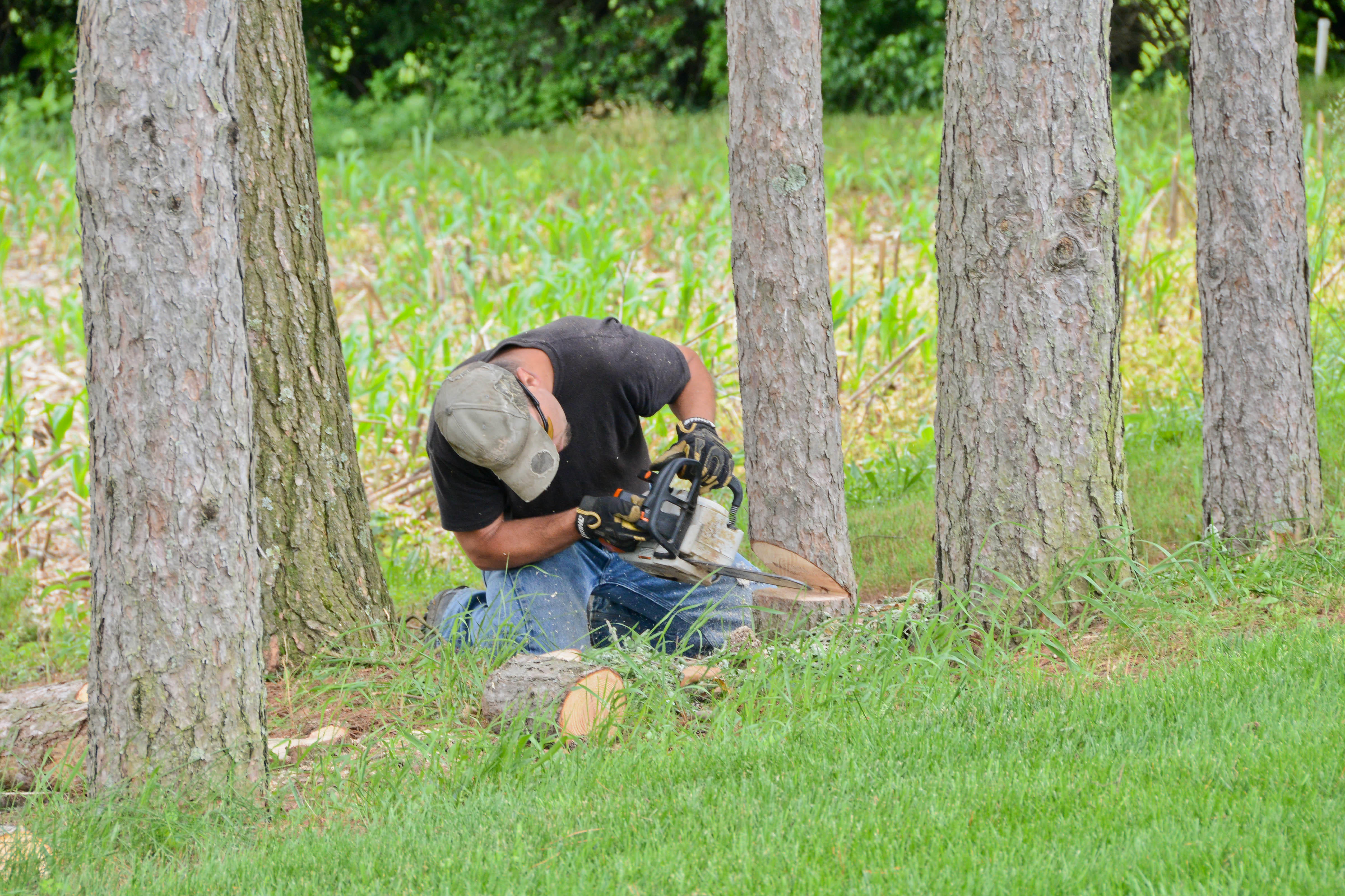 No Sweat Lawns & Trees, LLC image 3