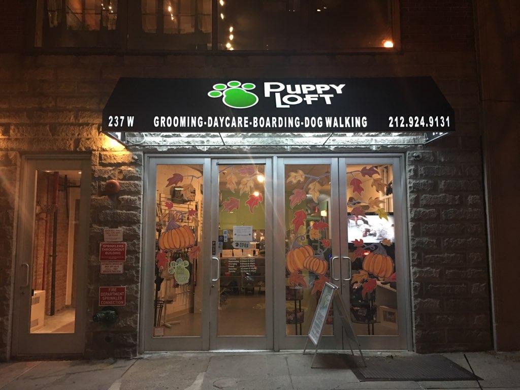 Puppy Loft Inc image 4