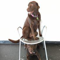 ComeSitStay Pet Boarding Grooming & Daycare image 7