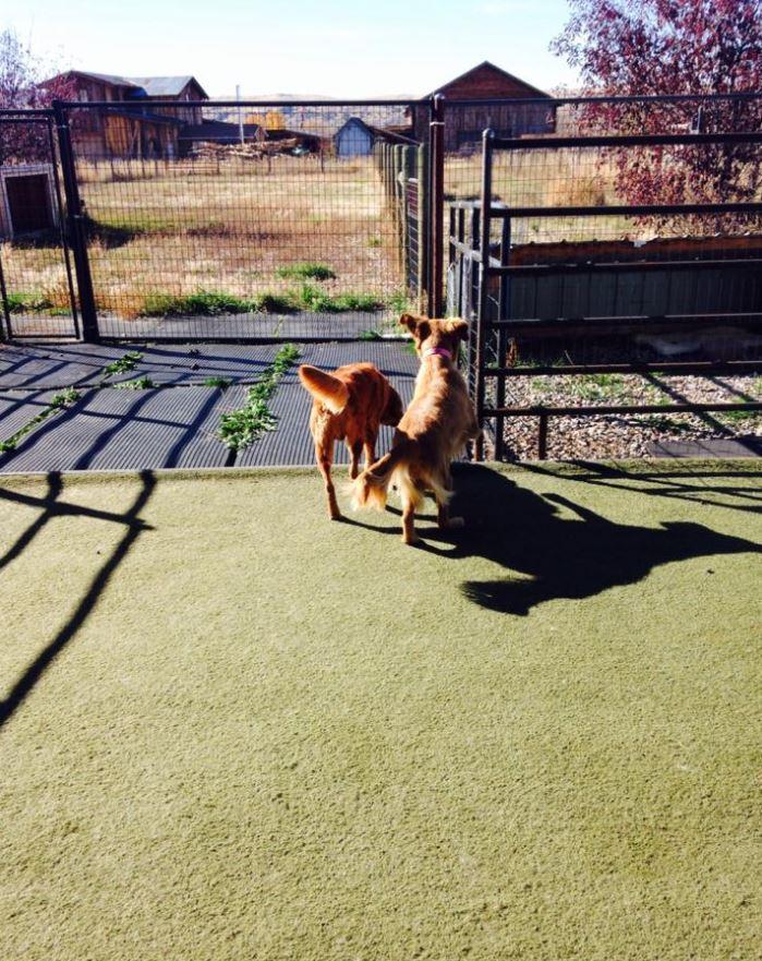 Doggie Daycare & Motel image 1