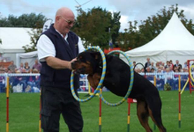 Dog Training Schools In Liverpool