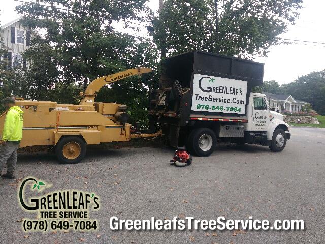 Greenleaf's Tree Service image 3
