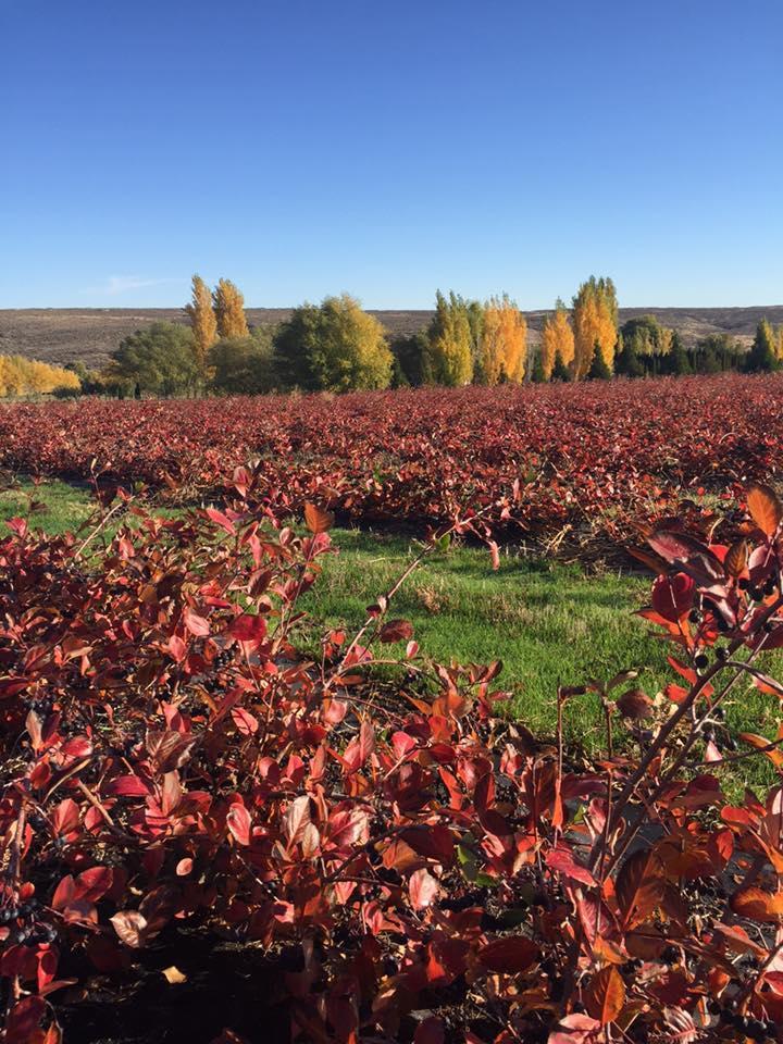 Mill Lane Winery - Yakima image 3