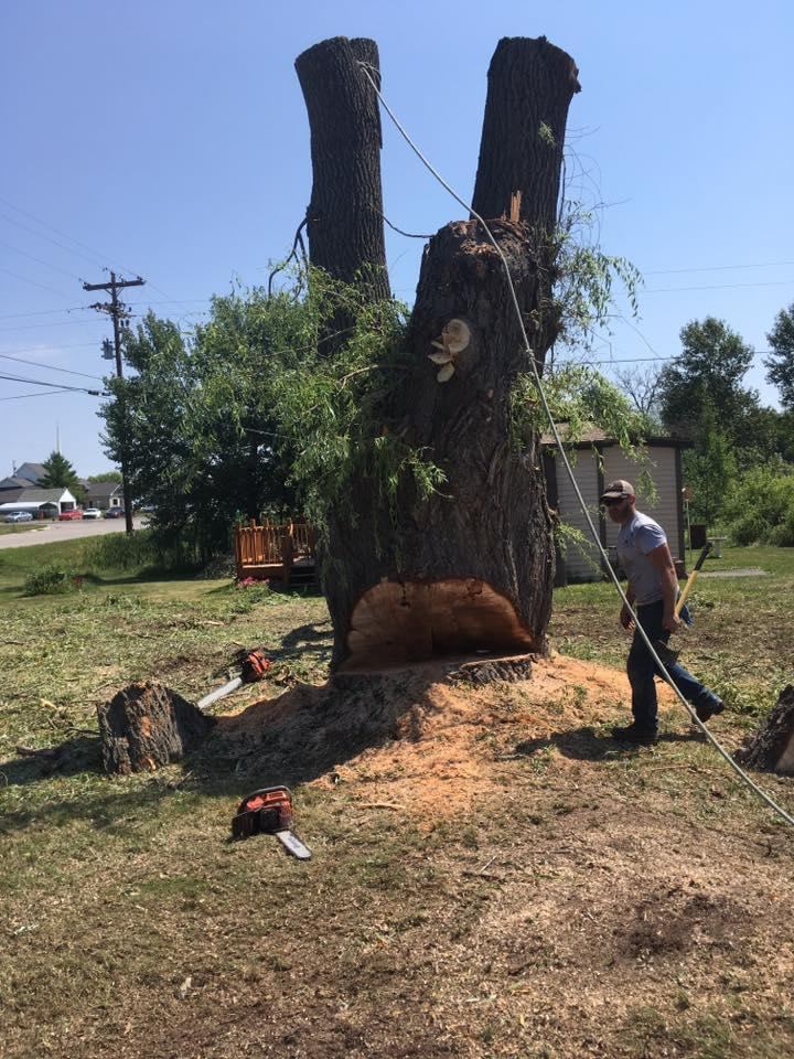 A-1 Tree Service, LLC image 5