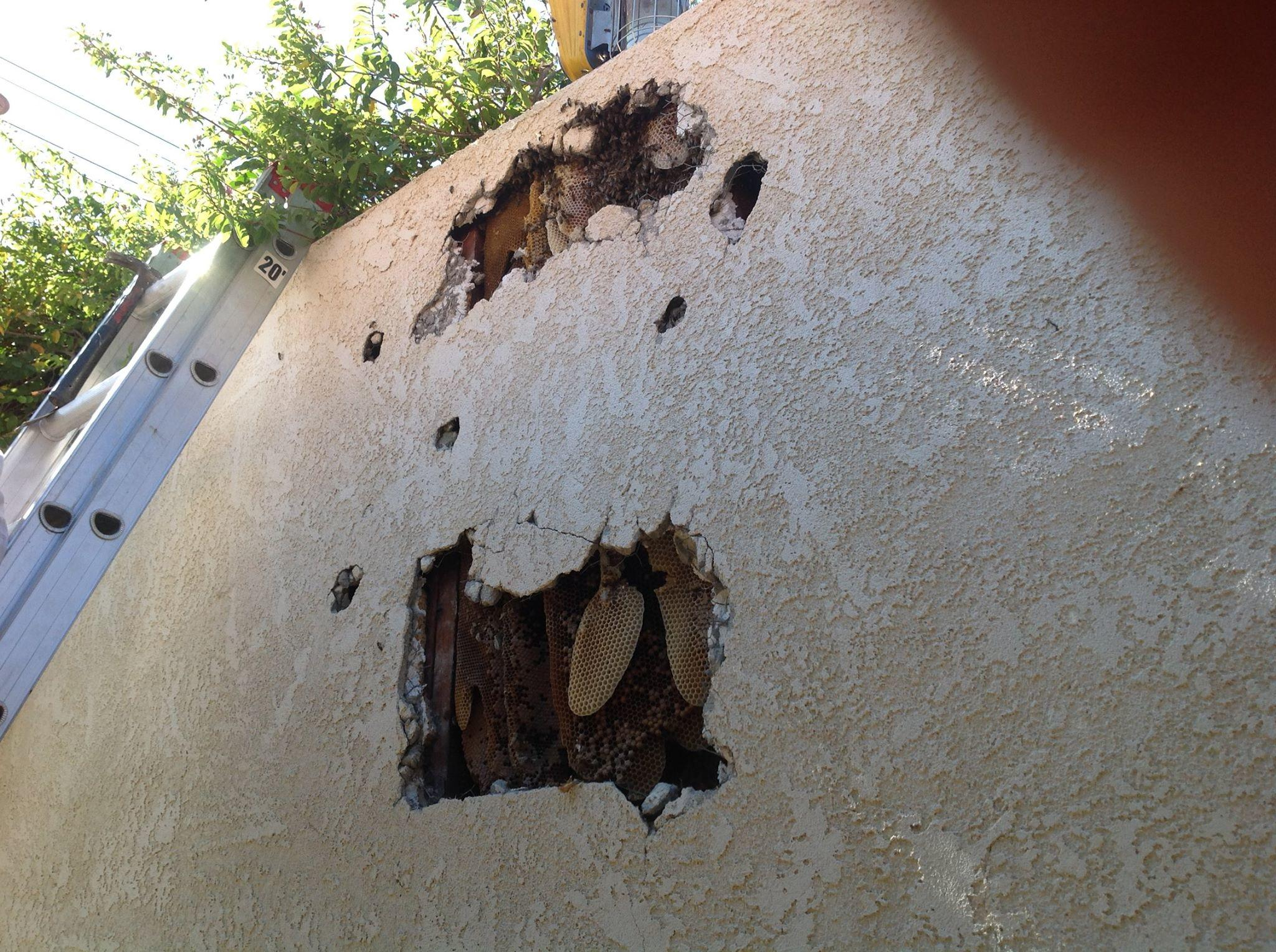 Killer Bee Pest Control, Inc image 0