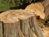 Bostwick Tree Service LLC image 1