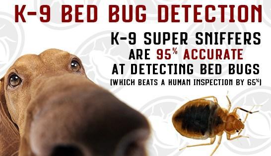 TLC Bed Bugs K-9 Inspection Service image 9