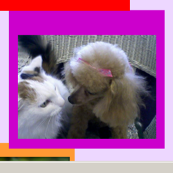Affectionately Pets House Calls Inc image 3