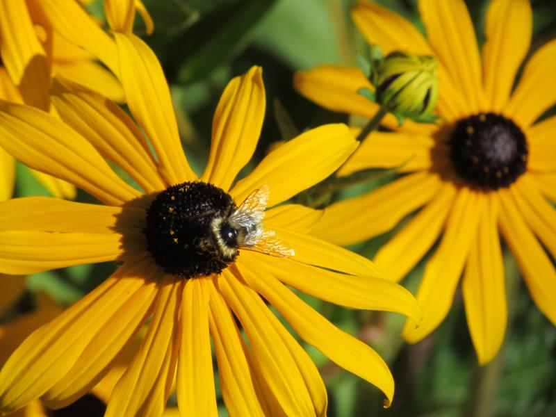 Compassionate Care Funerals in Williams Lake: Yellow Bee