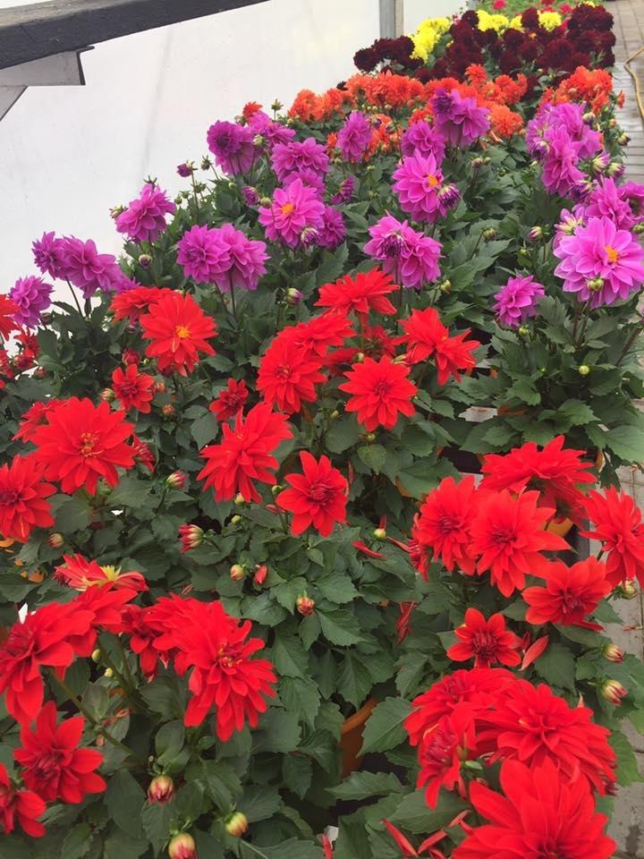 La Pépinière - fleuriste Daigneault à Sainte-Julie