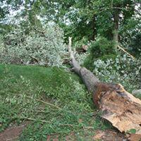 Piedmont Tree and Lawn Care image 7