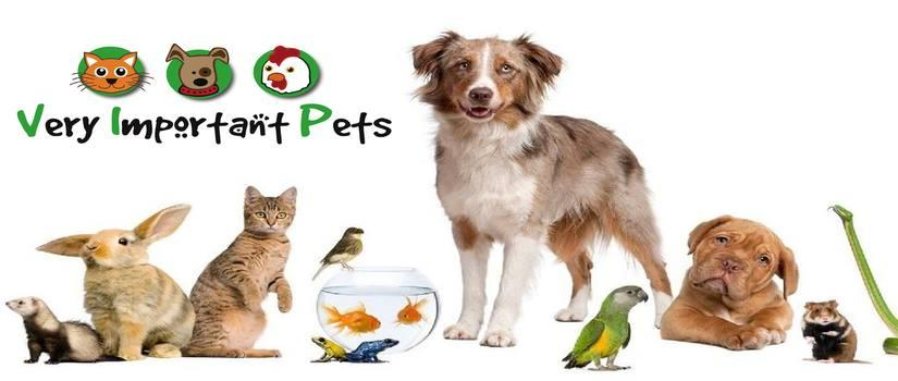 pets   care except veterinary services in liversedge