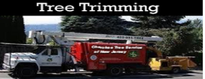 Cherokee Tree Service Of New Jersey image 2
