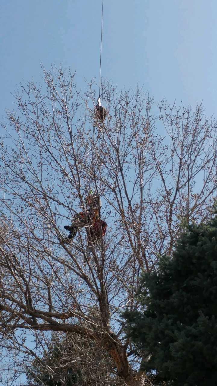 Mortensen Tree Service, Inc. image 7