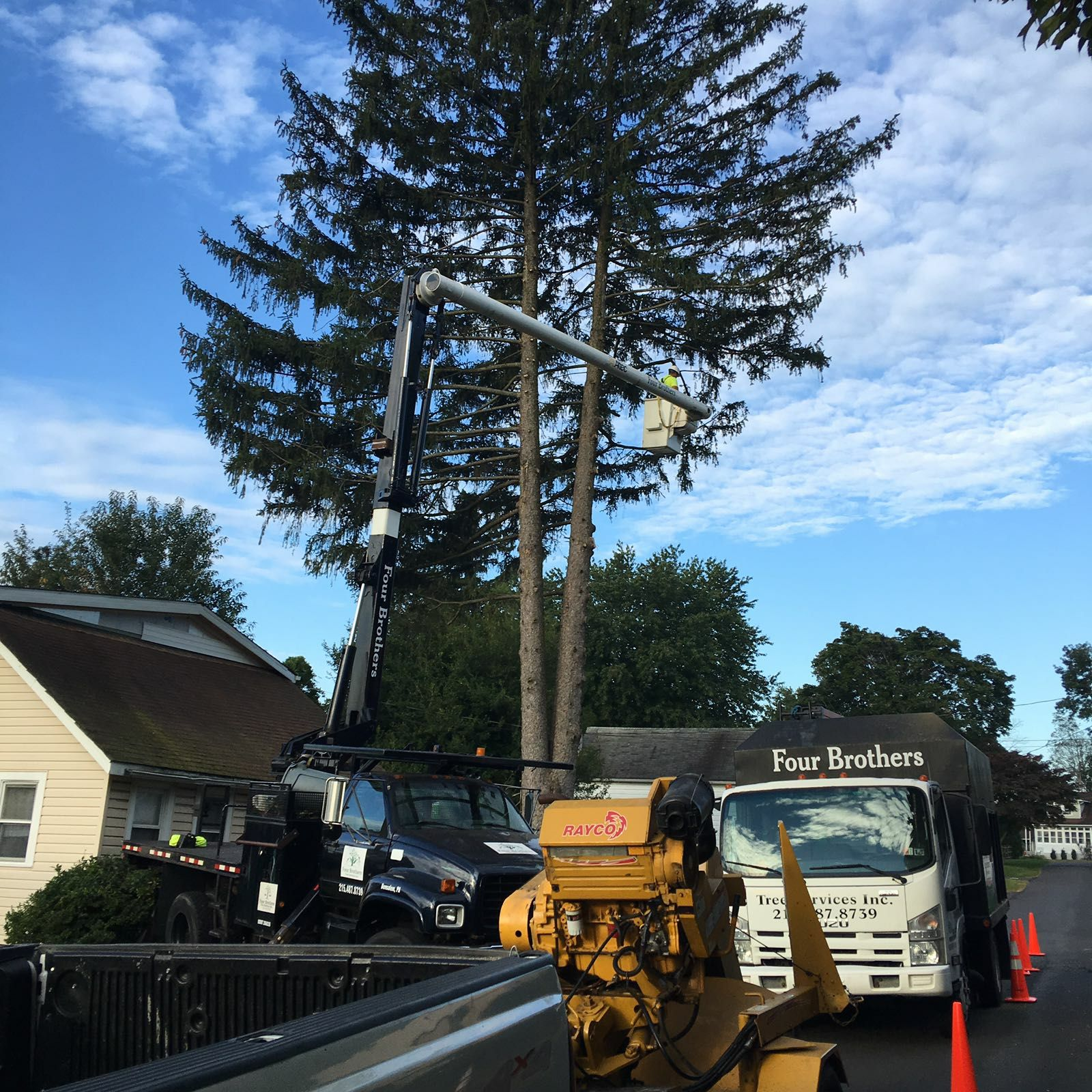 Four Brothers Tree Service Inc. image 35
