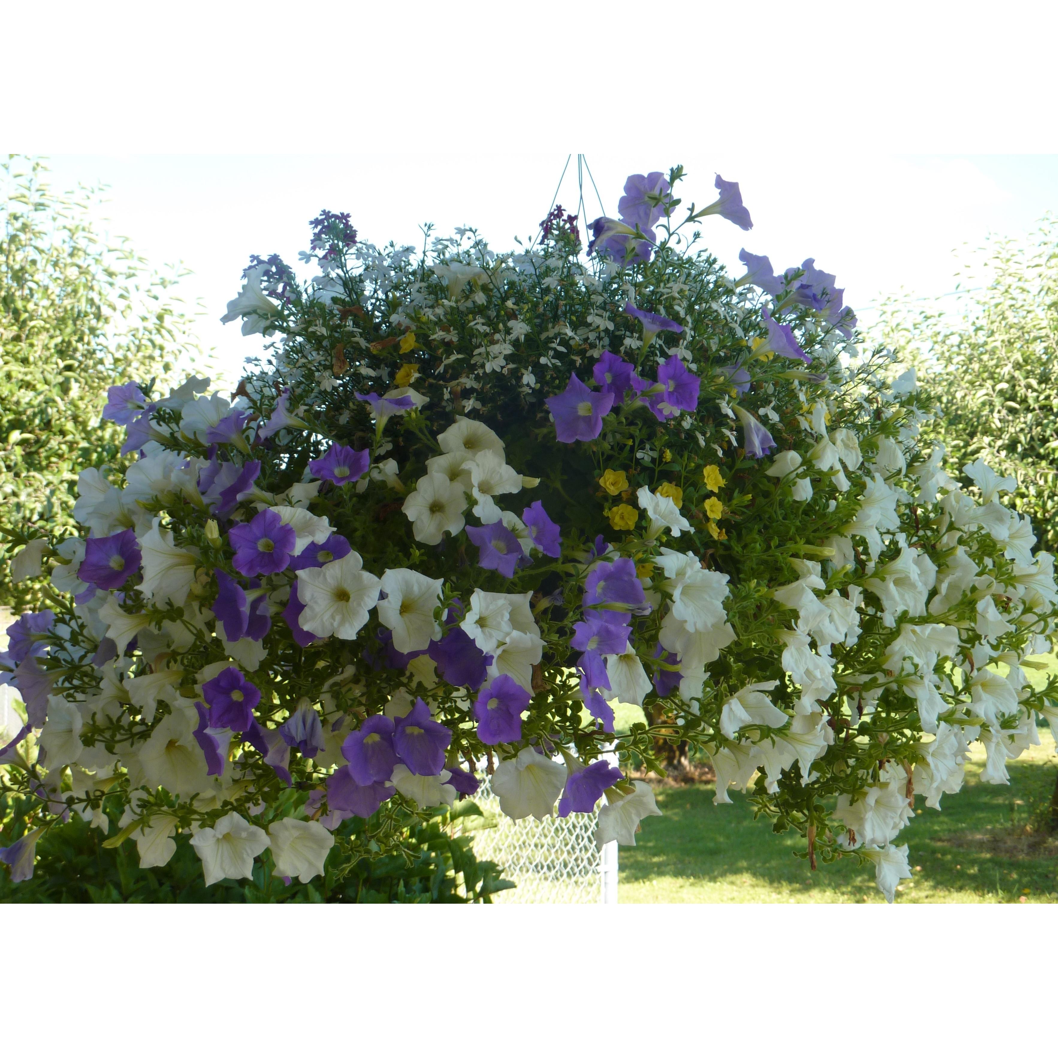 Purple Hen Flowers & Herbs