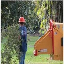 Windsor & Son Tree Service image 5