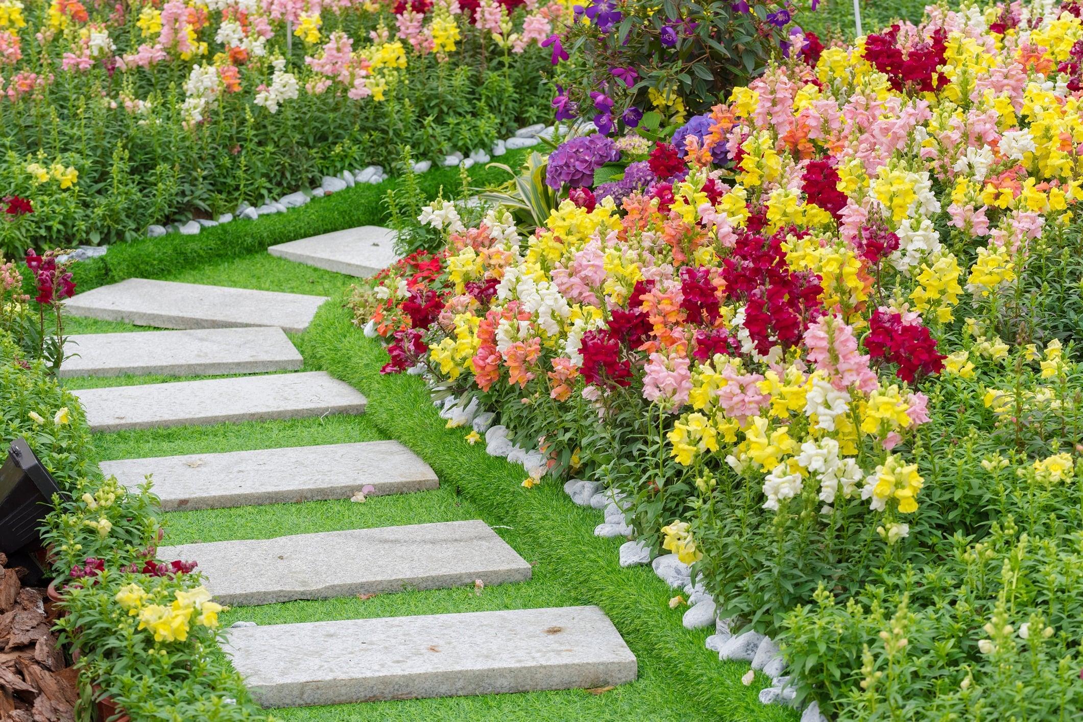 Бордюрные многолетние цветы для сада фото