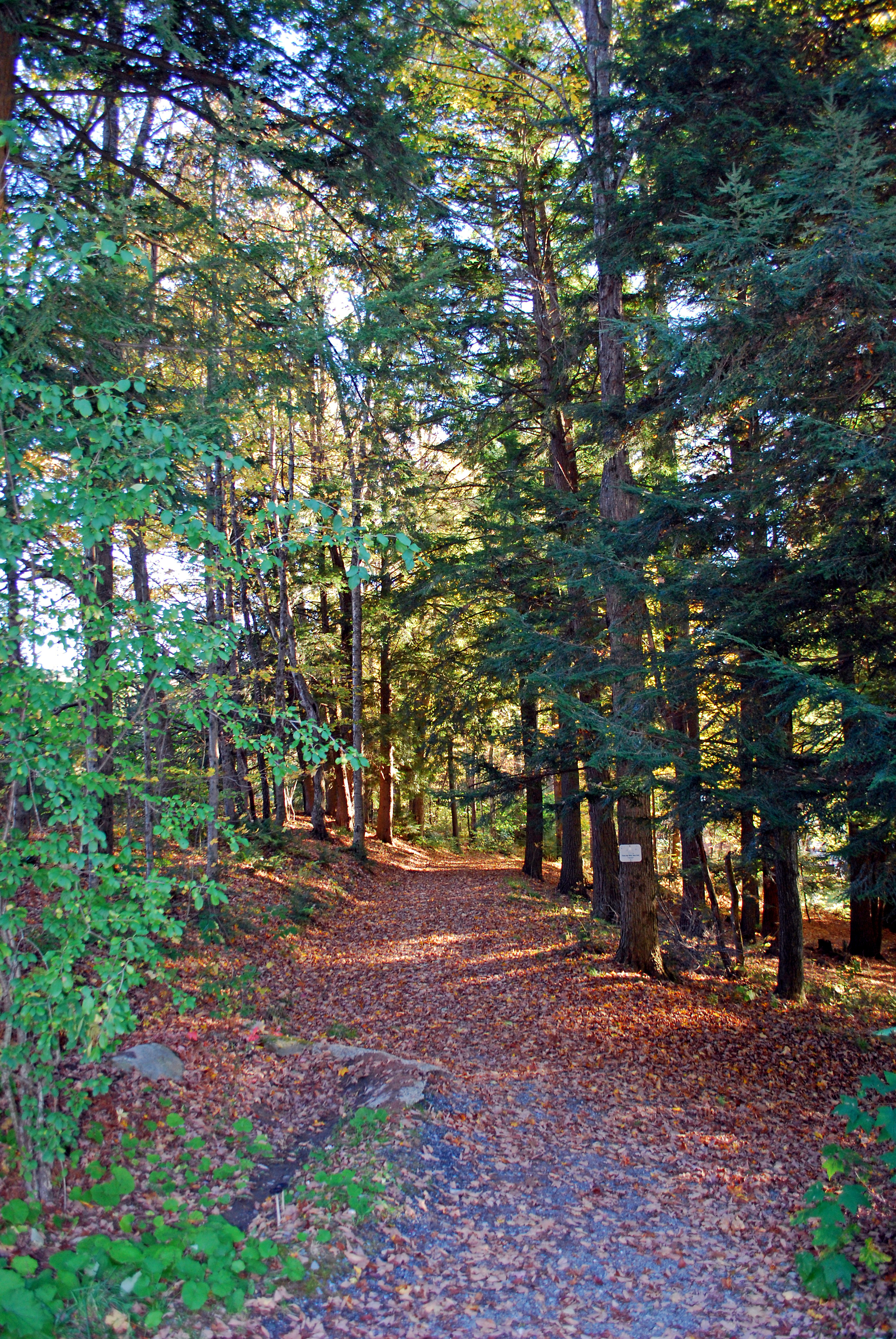 Quechee / Pine Valley KOA Holiday image 31
