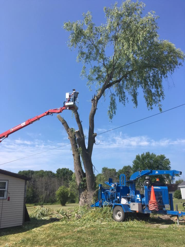 A-1 Tree Service, LLC image 7
