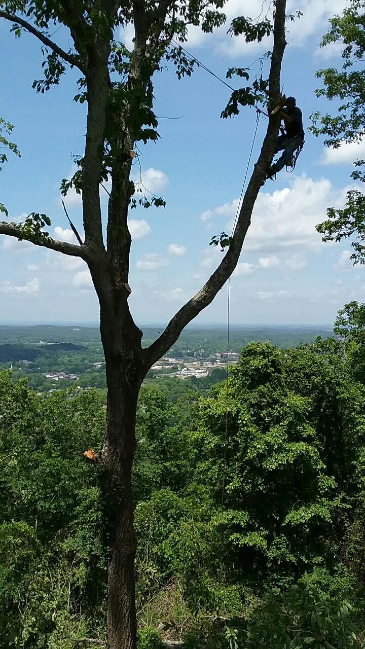 Elliott's Tree Service, LLC image 5