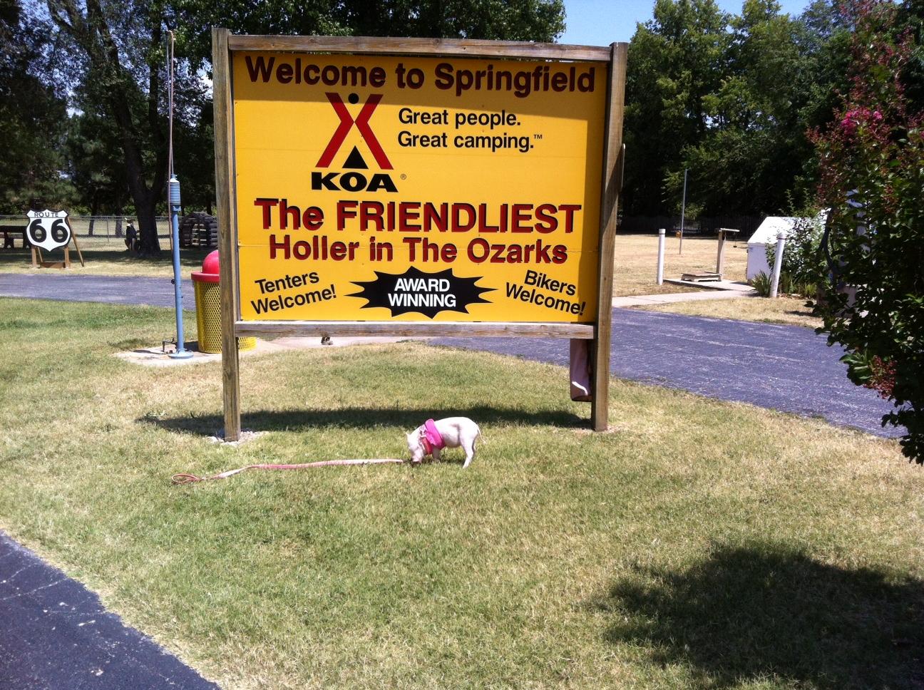 Springfield / Route 66 KOA Holiday image 17