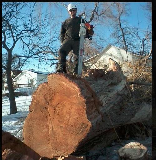 Hoffmann Tree Service image 1