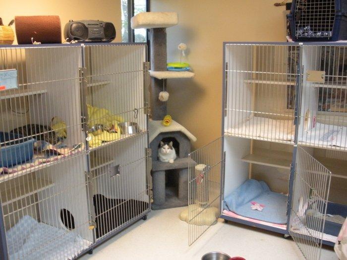 VCA Duncan Manor Animal Hospital image 2