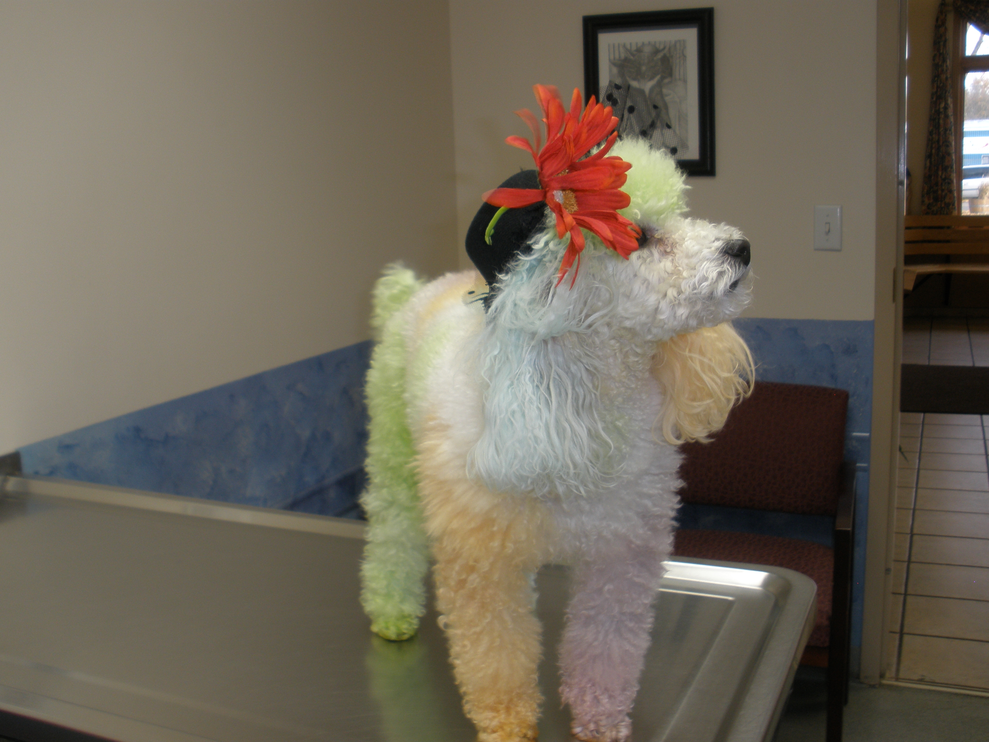South Shore Veterinary Hospital image 6