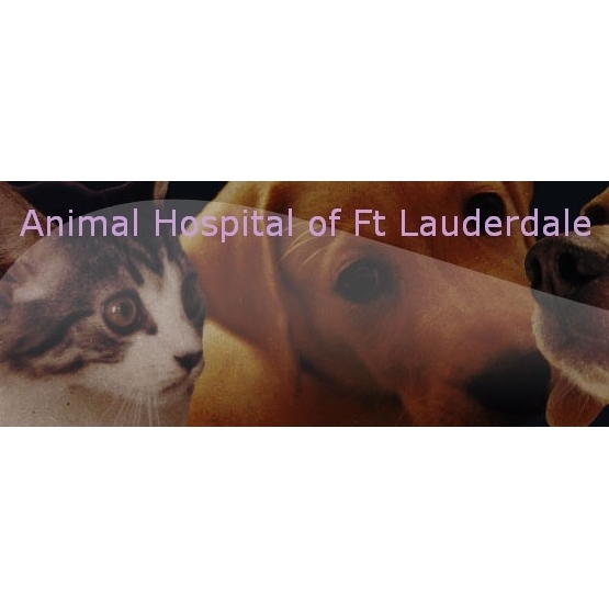 Animal Hospital Of Fort Lauderdale