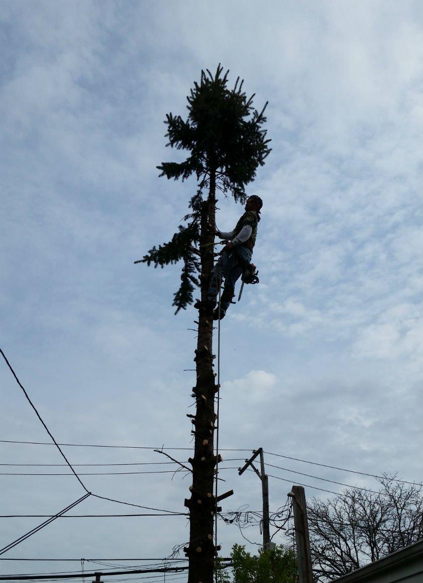 AJAX Tree Service image 8