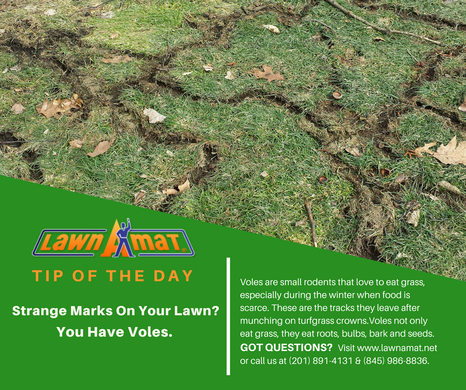 Lawn-A-Mat of Franklin Lakes image 1