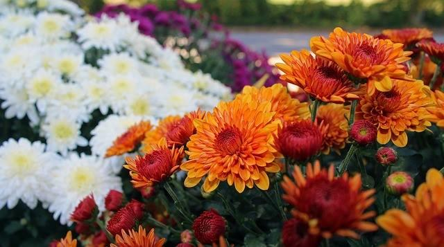 The Flower Shoppe, Inc image 0