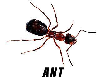 Rosenbloom Pest Control, Inc. image 7