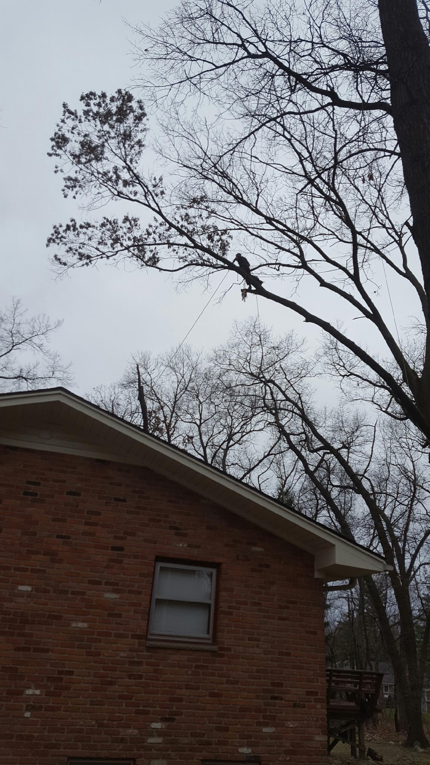 Coffman's Tree Service image 9
