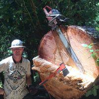 Morgan Tree Service image 0