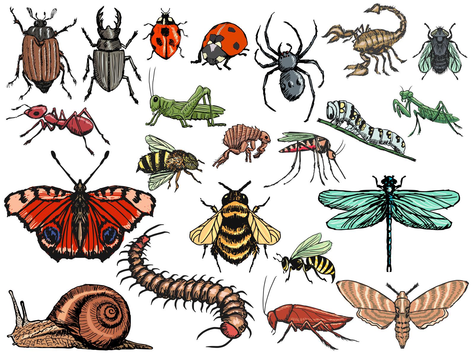 Verminator Pest Control LLC image 13
