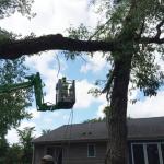 Russ's Tree Service image 9