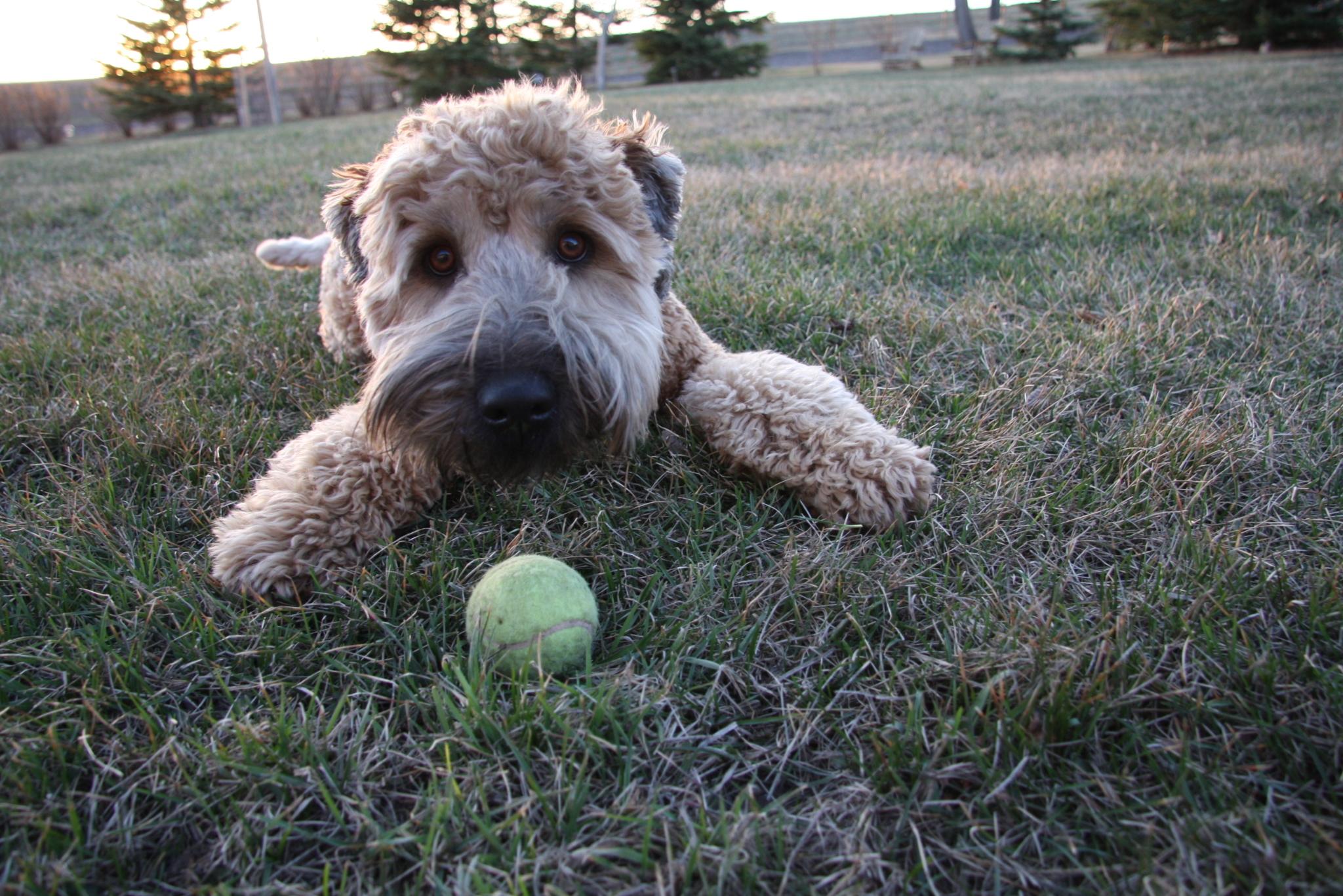 Cochrane Dog Kennels